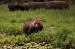 Curious Bear 3