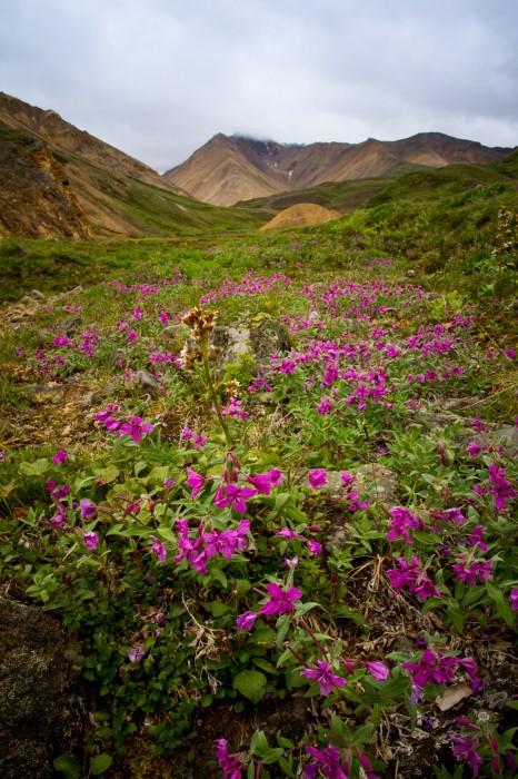 Kati-Alaska-8742
